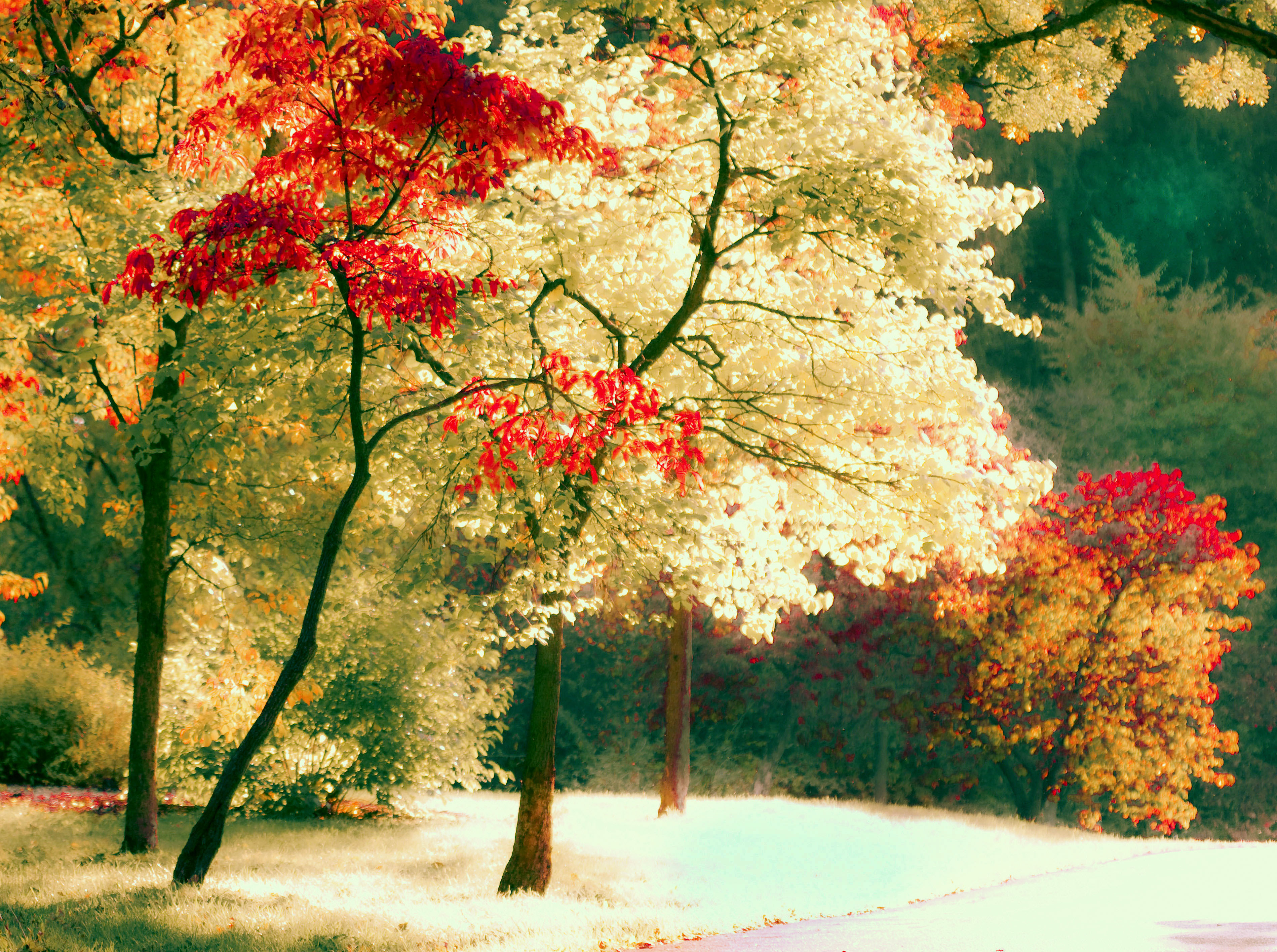 30 Beautiful Examples of Nature Photography Inspiration